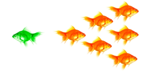 fishsplit